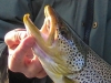 "Improper trout handling - ""gillplating"""